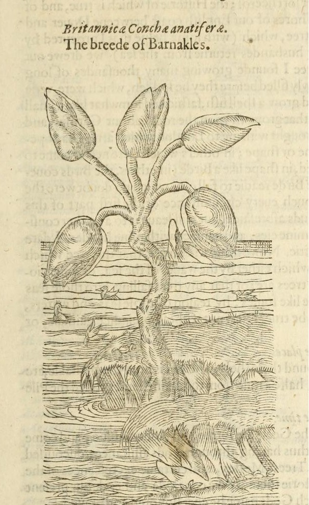 the_herball2c_or2c_generall_historie_of_plantes_28page_28139129